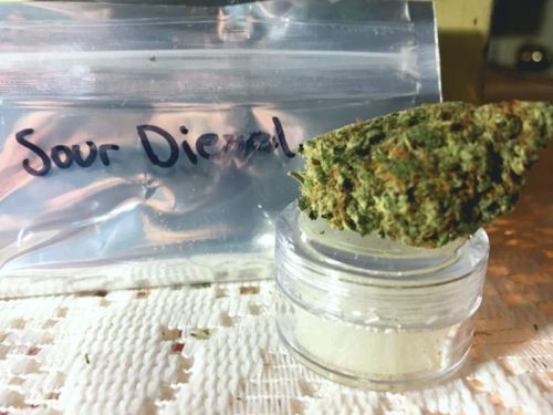 thehighclub-out-of-the-box-sour-diesel-strain