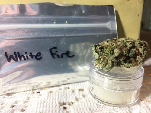 thehighclub-out-of-the-box-white-fire-strain