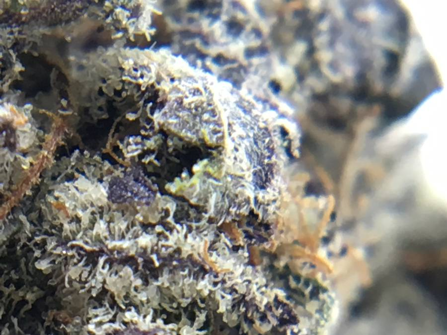 high-thc-dispensary-strain-review-purple-space-cookies-macro-2