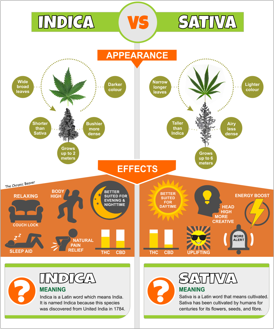 Indica VS Sativa Infographic