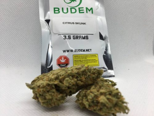 citrus-skunk-strain-review-budem-gallery-1