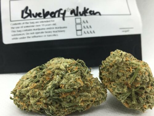 Evergreen-Medicinal-Strain-Review-Blueberry-Nukem