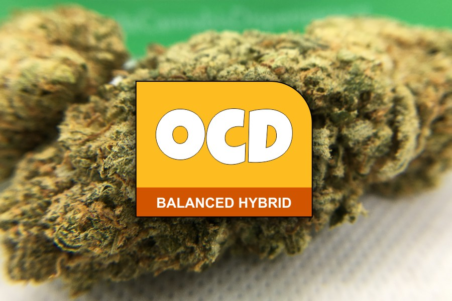 OCD Strain Review & Information