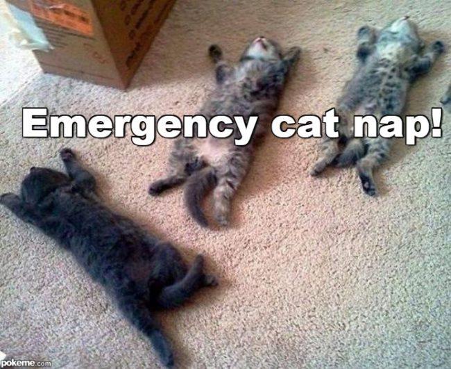 cat-nap-meme