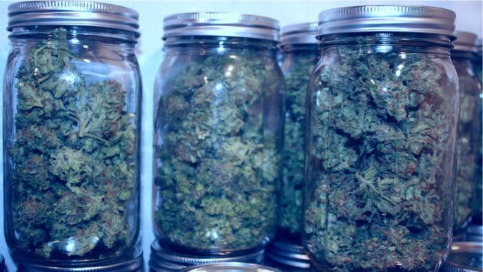 Never Keep Your Pot in the Freezer- How to Store Cannabis Properly