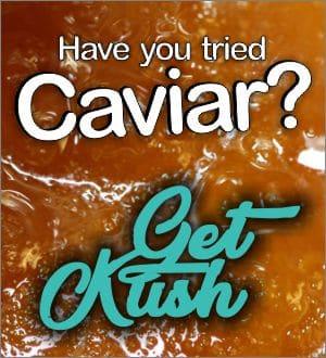 Cavier-High-Terpene-Full-Spectrum-Extract-Get-Kush