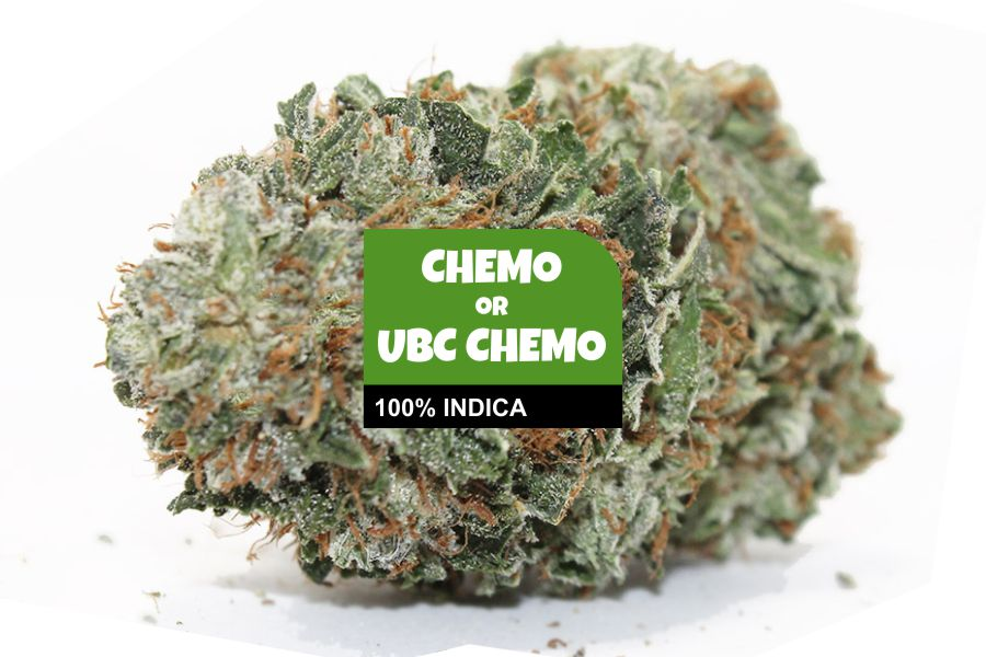Chemo Cannabis Strain Profile with Ratings & Reviews
