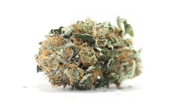 cheapweed.ca BC big bud strain