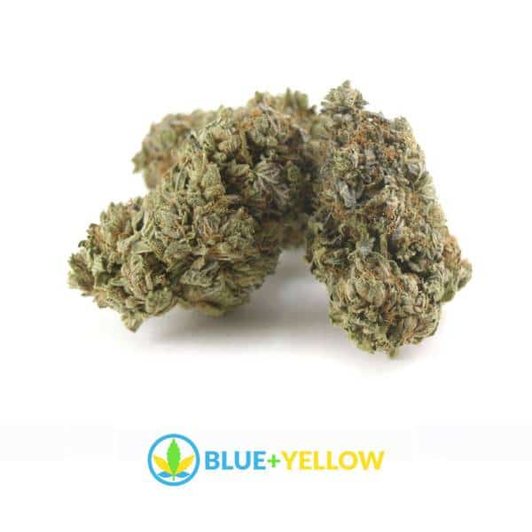pink-bubba-cannabis-strain-blue+yellow-online-dispensary
