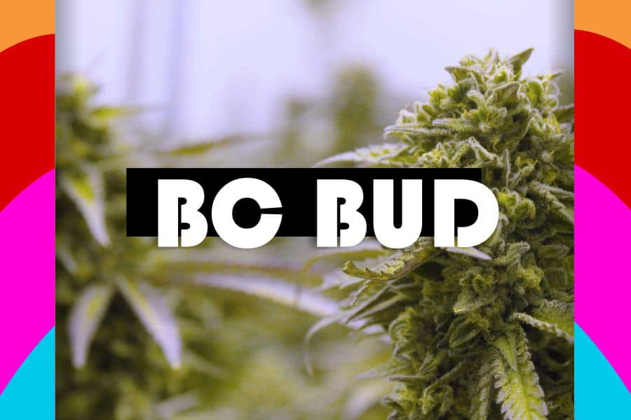 BC Online Dispensary List