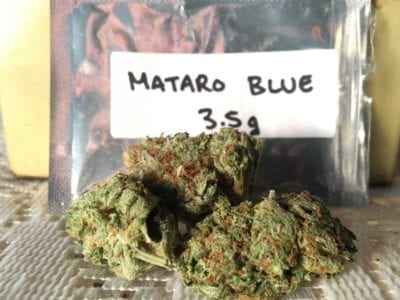 get-kush-unboxing-review-cannabis-flowers-mataro-blue