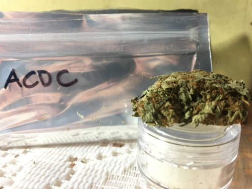 thehighclub-out-of-the-box-ACDC-strain