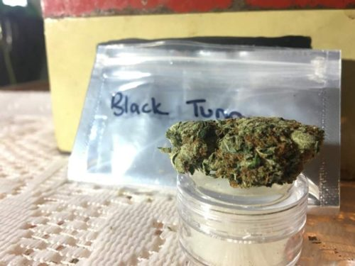 thehighclub-out-of-the-box-black-tuna-strain