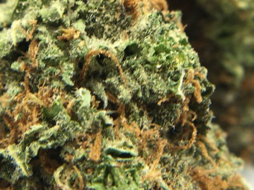 La-Grape-Strain-Review-Image-3