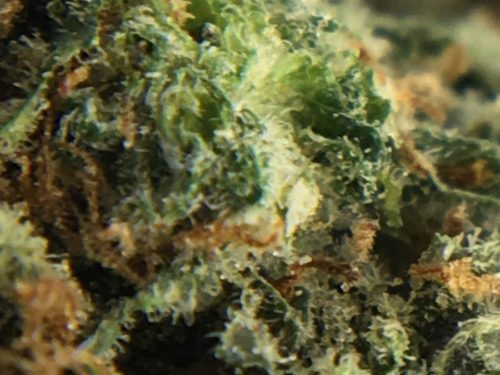 La-Grape-Strain-Review-Image-4