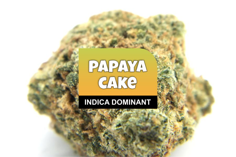 Papaya Cake Strain Review – The High Club