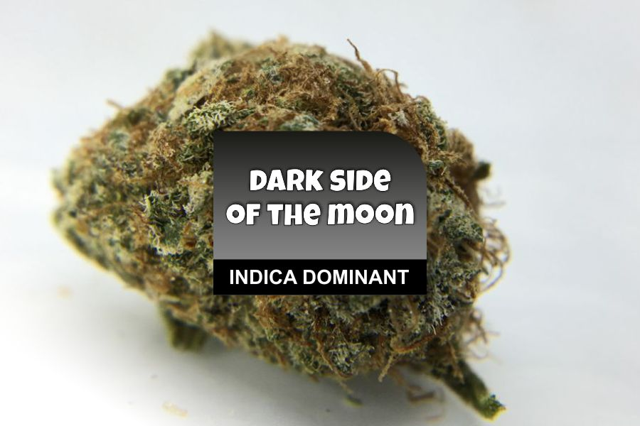 Dark Side of the Moon Strain Review: CannaWholesalers