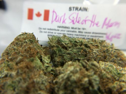 dark-side-of-the-moon-strain-review-image-1
