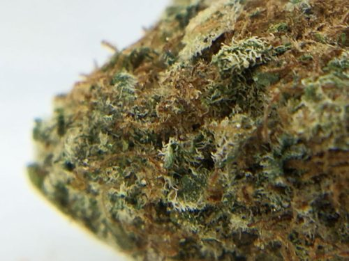 dark-side-of-the-moon-strain-review-image-3