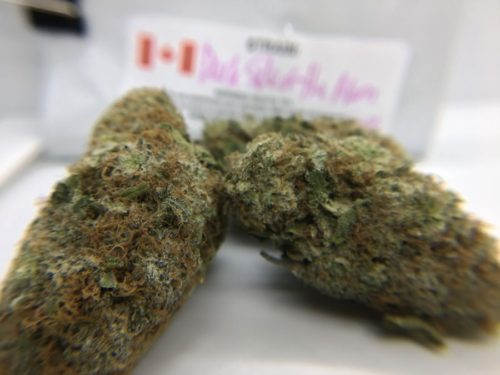 dark-side-of-the-moon-strain-review-image-6