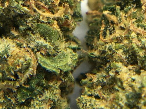Evergreen-Medicinal-Strain-Review-Rockstar-macro-2