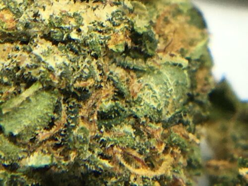 Evergreen-Medicinal-Strain-Review-Rockstar-macro