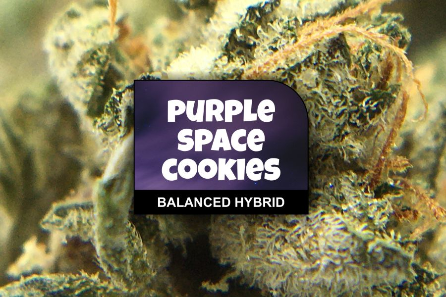 Purple Space Cookies Strain Review & Ratings