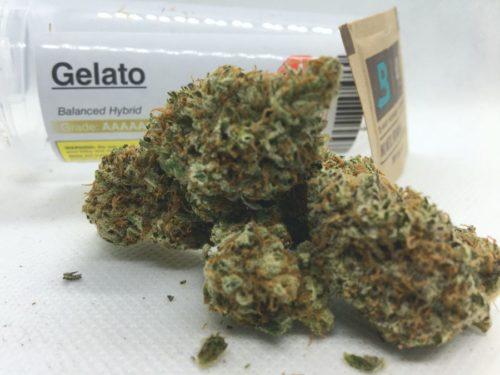 gelato-strain-buymyweedonline-dispensary