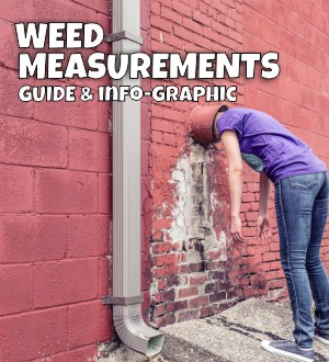 weed-measurements-guide-info-graphic