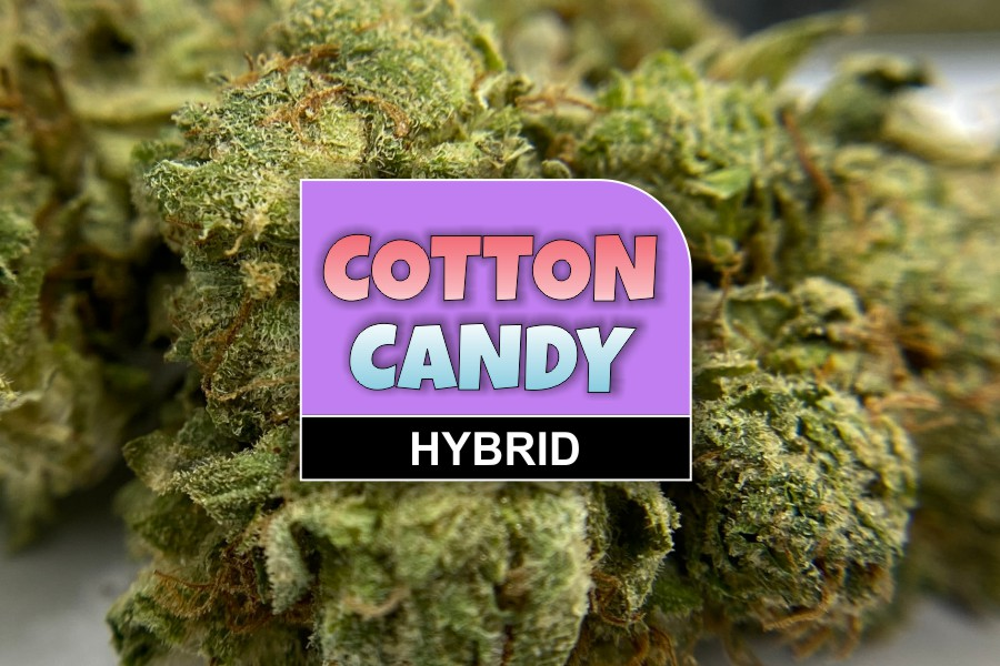 Cotton Candy Strain Review & Info