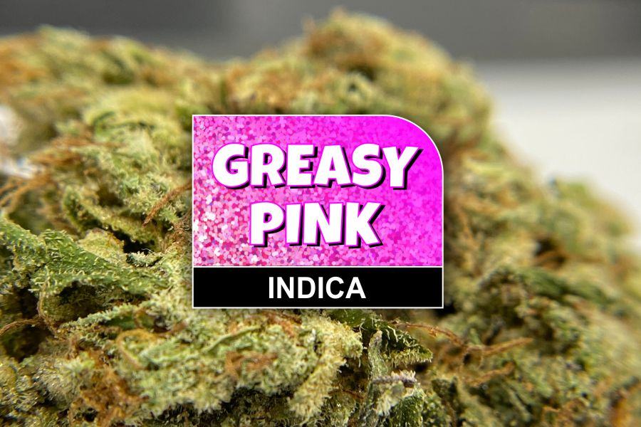 Greasy Pink Strain Review & Info