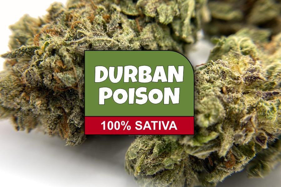 Durban Poison Strain Review & Info
