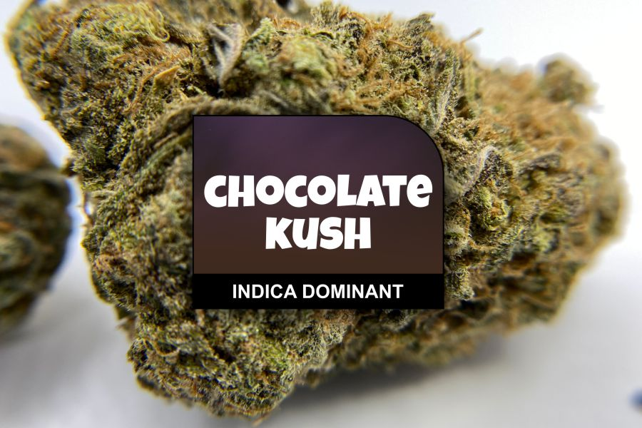 Chocolate Kush Strain Review with Ratings