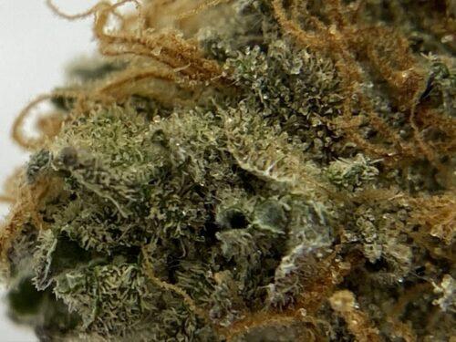 maui-wowie-strain-review-macro-2